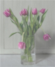Commended-Tulips in Pink-Alison Fryer