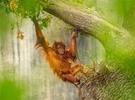 Highly Commended-Just Hanging Around-Geraldine Stephenson