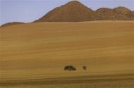 Commended-Namib Rand-Peter Herreaman