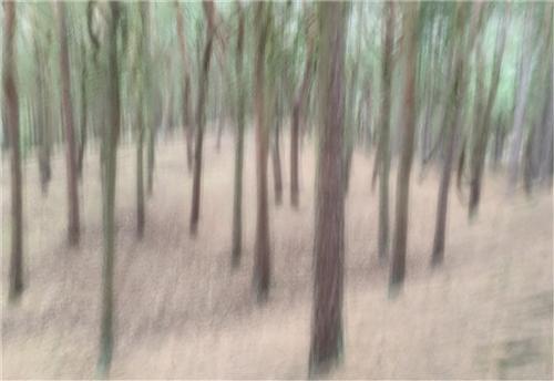 First-Icm Pinewood Impression-Alison J Fryer