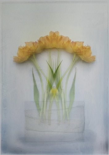 SPS Ribbon-Golden Symmrtry-Diane Owen-England