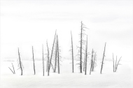 Yellowstone Winter - Michael Windle