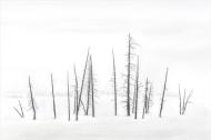Yellowstone Winter - Michael Windle