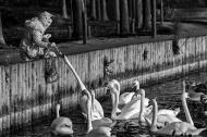 Swan Feeder - Richard Grokopf