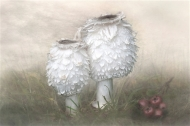 PSA Silver Medal-Shaggy Inkcaps-Barbara Hawthorne-- England