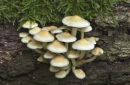 commended-sulphur tuft-barbara lawton