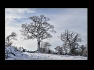 commended-winter trees-cheryl leyser