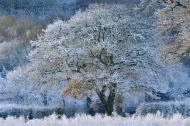 commended-winter's decoration-van greaves