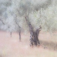 fiap ribbon olive trees irene froy-england