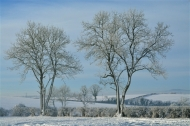 highly commended-winter trees-van greaves