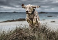 pagb ribbon-chasing rabbits-ann margaret miles-england
