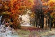 second-cold autumn glade-deborah degge