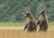 sps ribbon-bear siblings-richard kay arps-england