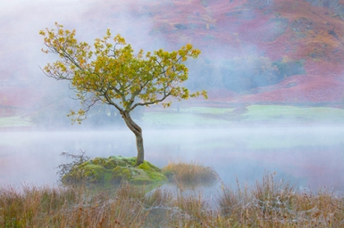 Autumn Morning, Rydal Water
