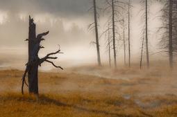 Dead Tree and Mist